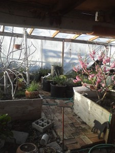 GREENHOUSE 2020 Peachy keen on rt Mar15